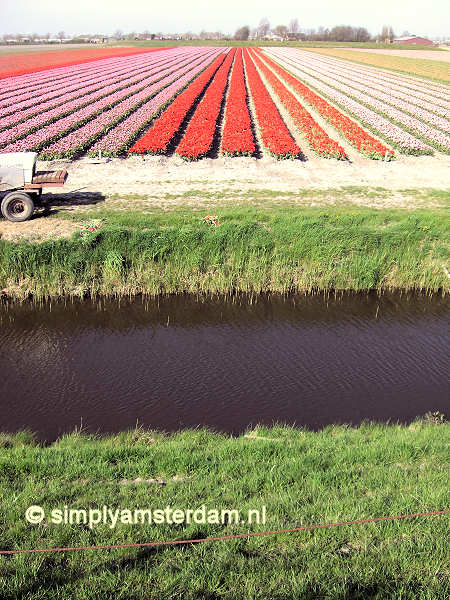 Flower Show in Amsterdam http://www.simplyamsterdam.nl/news/Keukenhof_flower_show_closed_with_record_number_of_vistors.htm