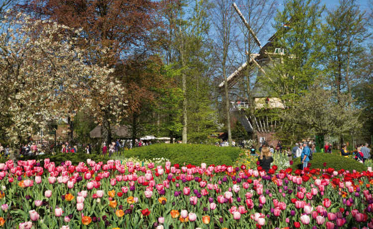 Opening of Keukenhof flower exhibition starts yearly flower season in Holland